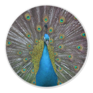 Stunning Peacock Ceramic Knob