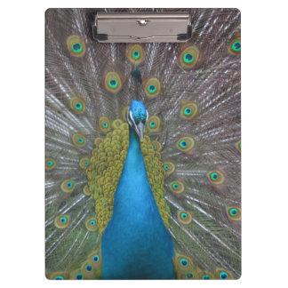 Stunning Peacock Clipboard
