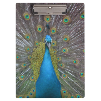 Stunning Peacock Clipboards