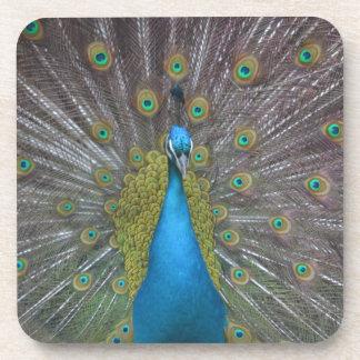 Stunning Peacock Coaster