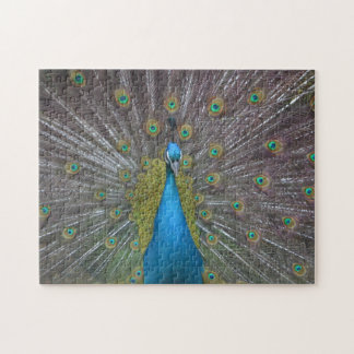 Stunning Peacock Jigsaw Puzzle