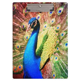 Stunning Peacock Photo Clipboard