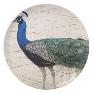 Stunning Peacock Plate