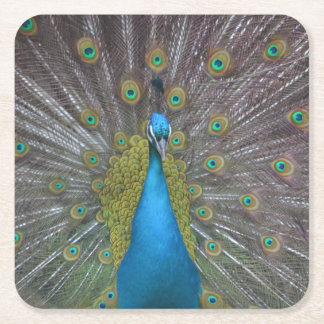 Stunning Peacock Square Paper Coaster