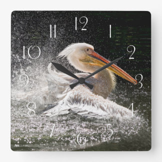 Stunning pelican in water square wall clock