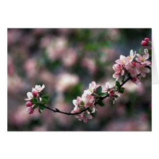 Stunning Pink Cherry Blossoms Card