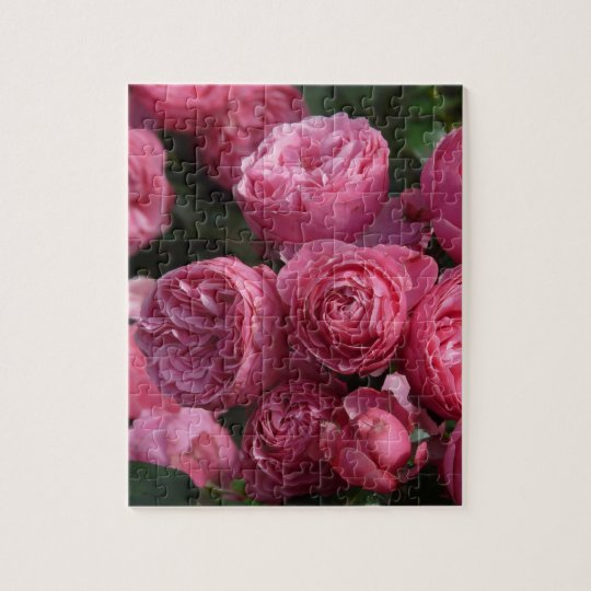 Stunning Pink Roses Jigsaw Puzzle