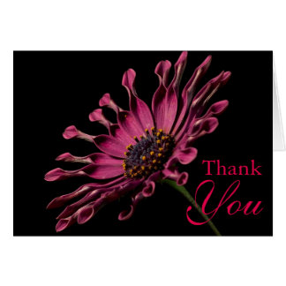 Stunning Purple African Daisy Thank You Card