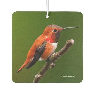 Stunning Rufous Hummingbird on the Cherry Tree Air Freshener