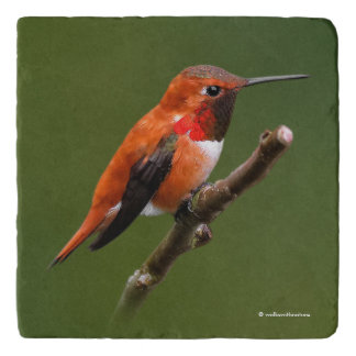 Stunning Rufous Hummingbird on the Cherry Tree Trivet