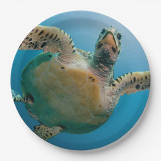 Stunning sea tortoise 9 inch paper plate