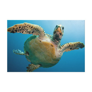 Stunning sea tortoise canvas print