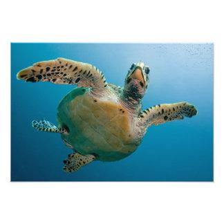 Stunning sea tortoise photo print