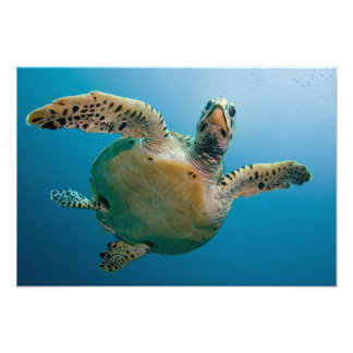 Stunning sea tortoise photograph
