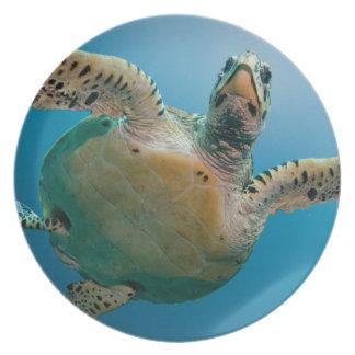 Stunning sea tortoise plate