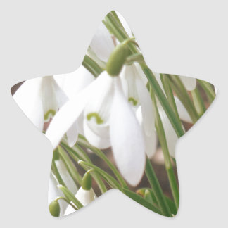 Stunning Snowdrops Star Sticker