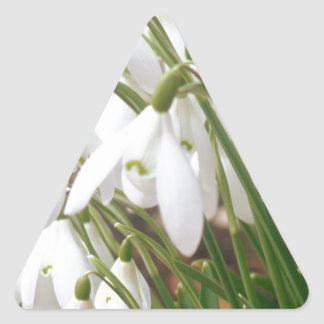 Stunning Snowdrops Triangle Sticker