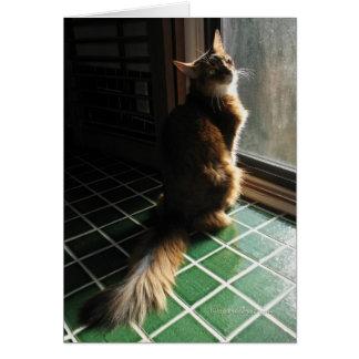 Stunning Somali Cat Card