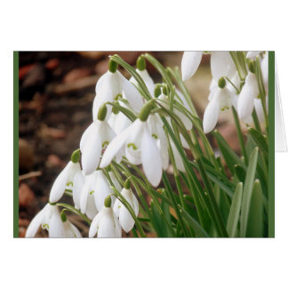 Stunning Spring Snowdrops Card