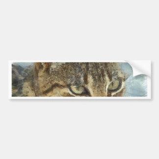 Stunning Tabby Cat Close Up Portrait Bumper Sticker