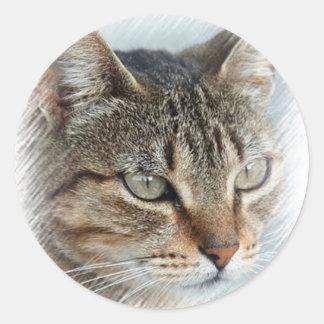 Stunning Tabby Cat Close Up Portrait Classic Round Sticker