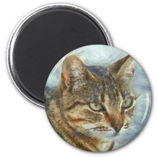 Stunning Tabby Cat Close Up Portrait Magnet