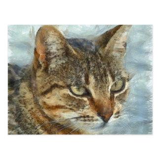 Stunning Tabby Cat Close Up Portrait Postcard