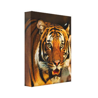 Stunning tiger portrait canvas print