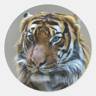 Stunning tiger portrait classic round sticker