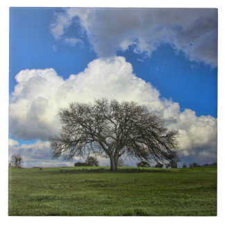 Stunning Tree of Life type Oak Tree and Clouds Art Tile