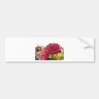 Stunning Unique Eye Catching Design Bumper Sticker