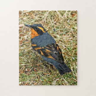 Stunning Varied Thrush on the Lawn Puzzle
