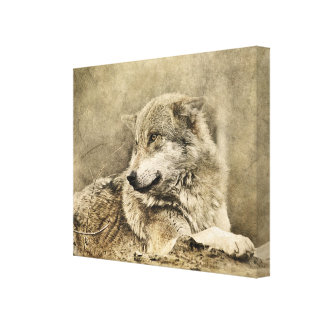 Stunning vintage wolf lying down canvas print