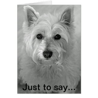 Stunning Westie Dog - Sorry Card