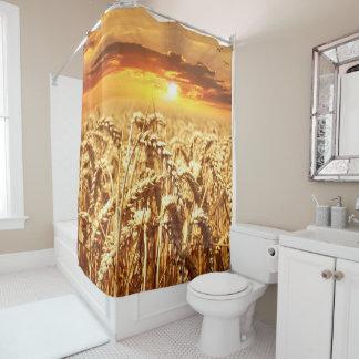 Stunning wheat field sunset