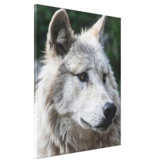 Stunning wolf canvas print