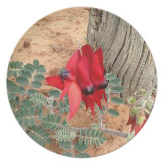 Sturt's Desert Pea photo plate