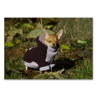 Stylish Dressed Chihuahua Puppy Table Card
