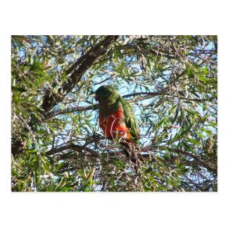 Stylish Green King Parrot With Orange Chest Sittin Postcard