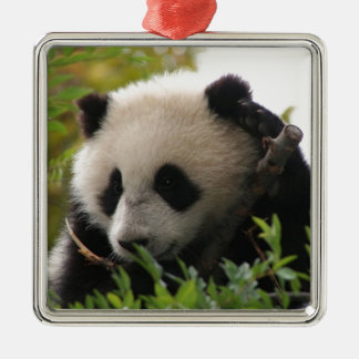 Su Lin, giant panda bear cub at the San Diego Zoo Metal Ornament
