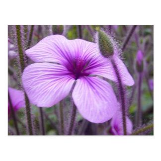 Subtle Purple Postcard