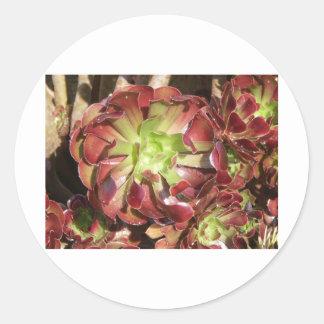 Succulent Classic Round Sticker