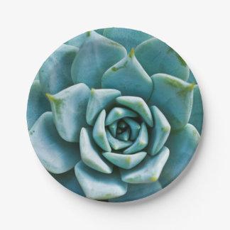 Succulent Closeup Paper Plate