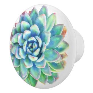 succulent decorative knob