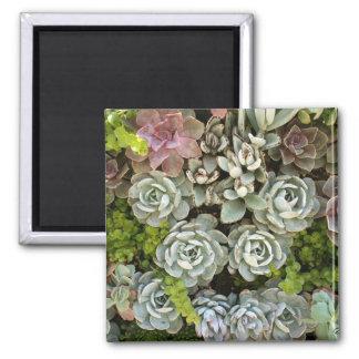 Succulent Garden 1 Square Magnet