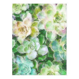 Succulent Garden by Cindy Bendel Postcard