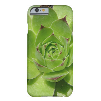 Succulent iPhone 6 case