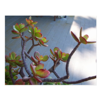 Succulent on an Oxnard Deck....nature's design... Postcard
