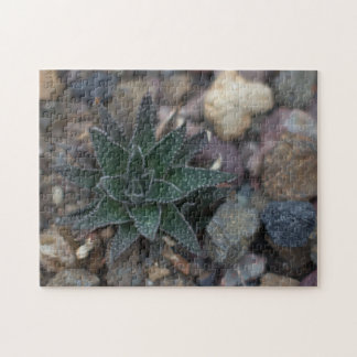 Succulent on Rocks Jigsaw Puzzle