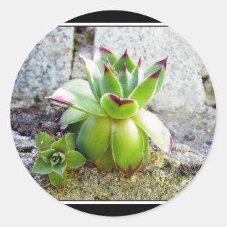 succulent plant classic round sticker